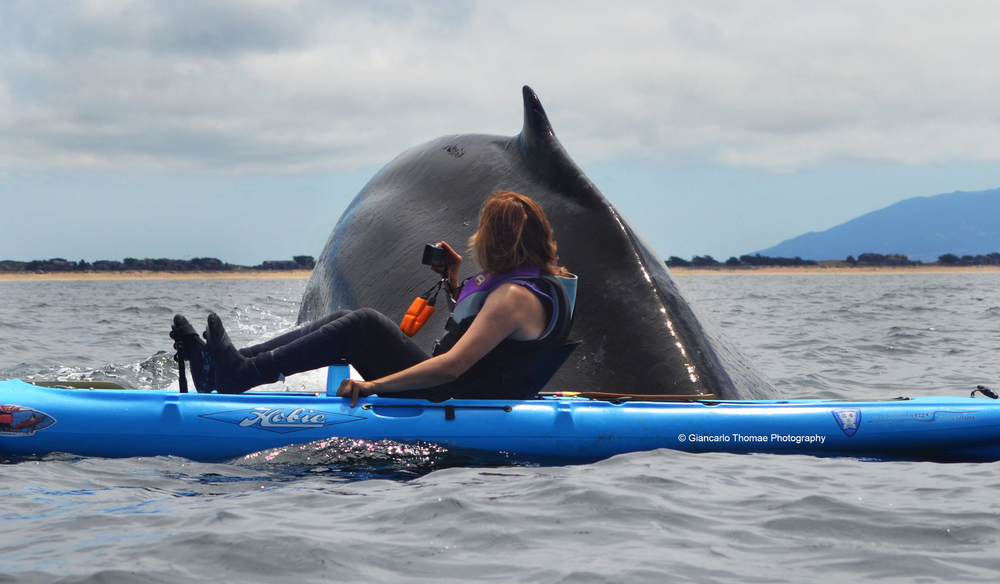 kayakedit.jpg