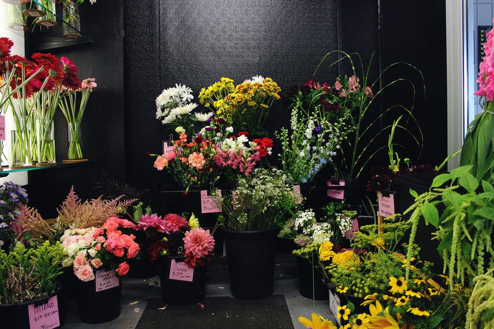 flora8.jpg