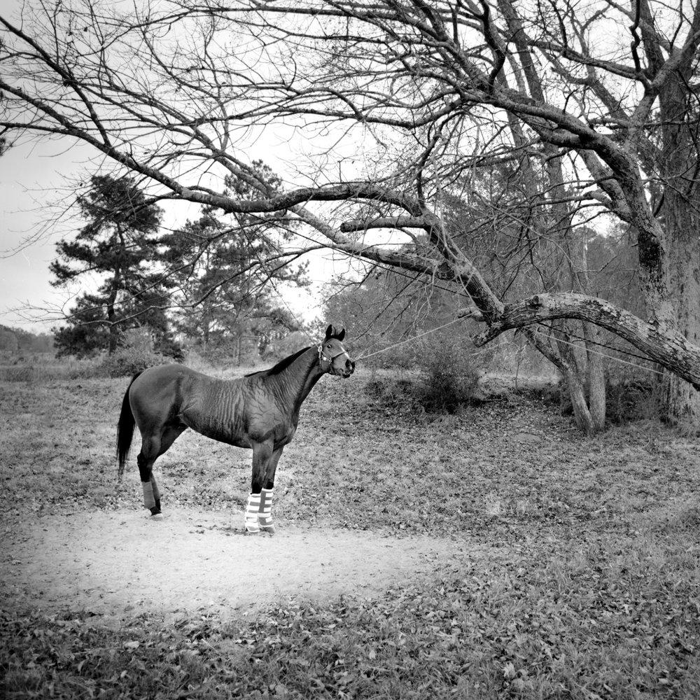BT Horse under tree wp.jpg