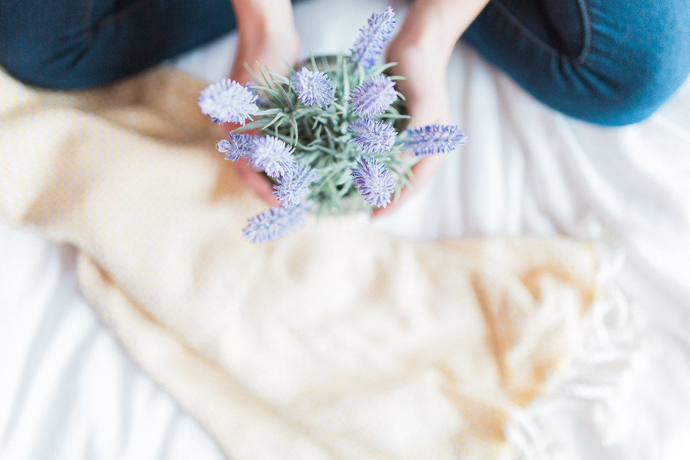 From above | Custom Email Address | Cozy Bed and Blanket | Product Photography