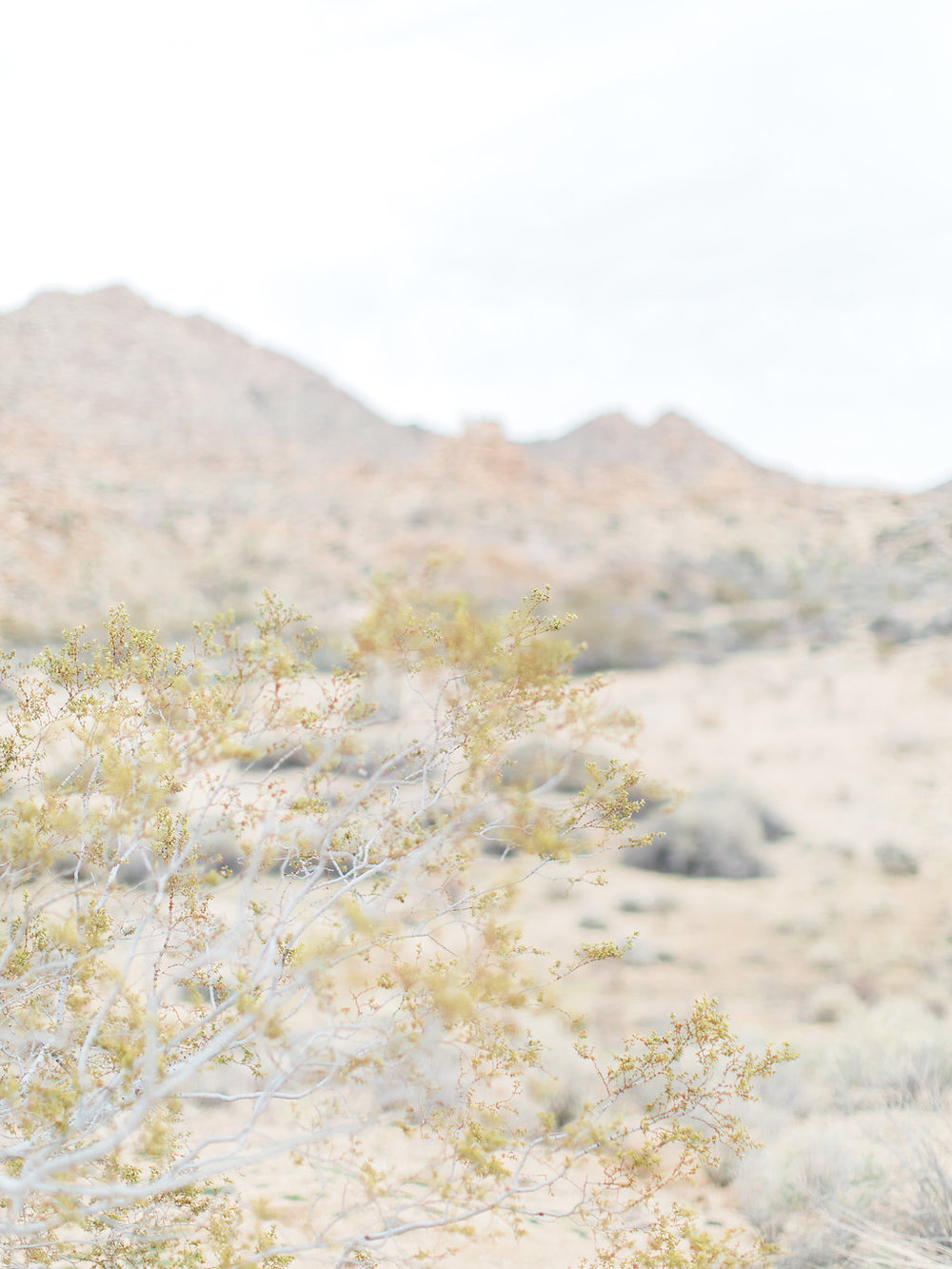 Joshua Tree Engagement Session | What to Wear for Pictures | Southern California Wedding Photographer | Mastin Labs Fuji Film | Fine Art Photographer | Desert Shoot | Desert Details.jpg
