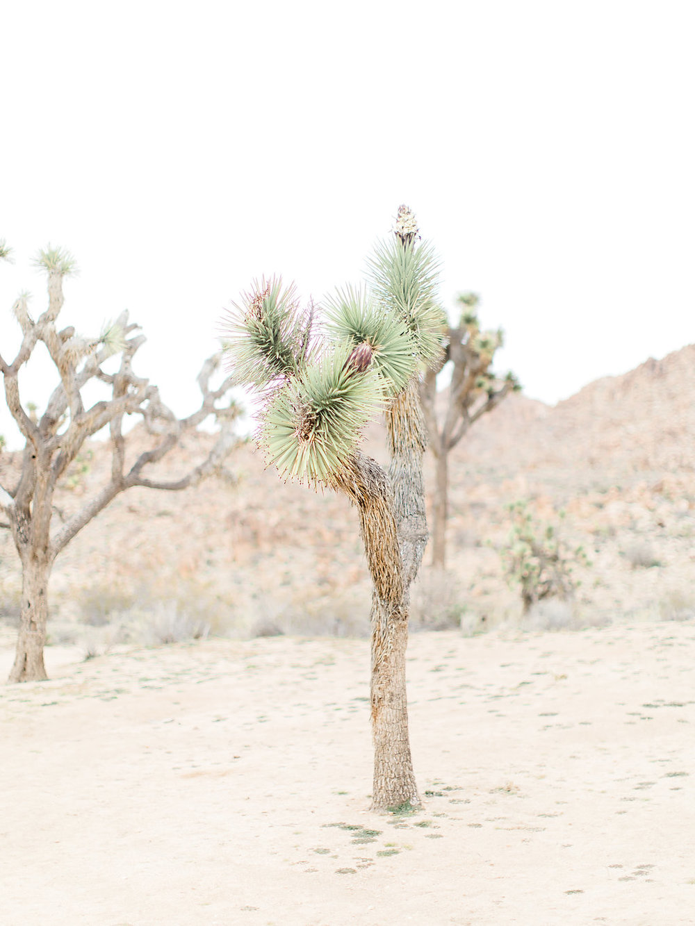 Joshua Tree Engagement Session | What to Wear for Pictures | Southern California Wedding Photographer | Mastin Labs Fuji Film | Fine Art Photographer | Desert Shoot | Joshua Tree.jpg