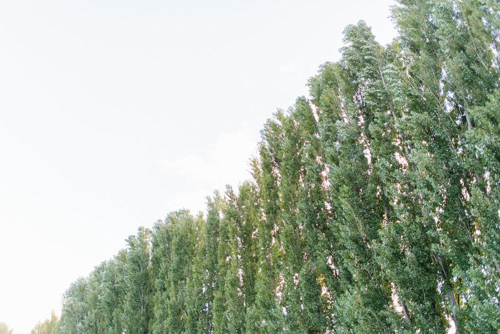 Stunning Fall Washington Wedding | PNW Wedding | Seattle Wedding Photographer Light and Airy | VSCO | Emma Rose Company Photography | Hydrangea Wedding Dress | Wedding Details | Non Traditional Wedding Gown-55.jpg
