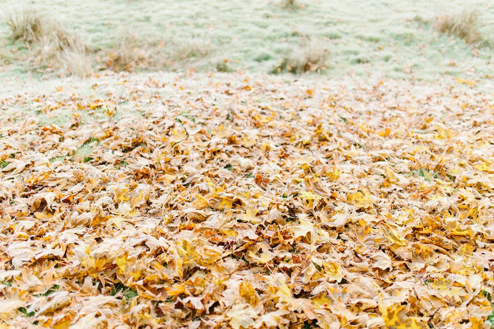 Sunrise Engagement Session on Cattle Ranch | Emma Rose Brides | Emma Rose Company Photography | Beautiful Sunrise Photo Session | VSCO | Winter Engagement Frosty Field Photo Session | Cute Engagement Inspiration-21.jpg