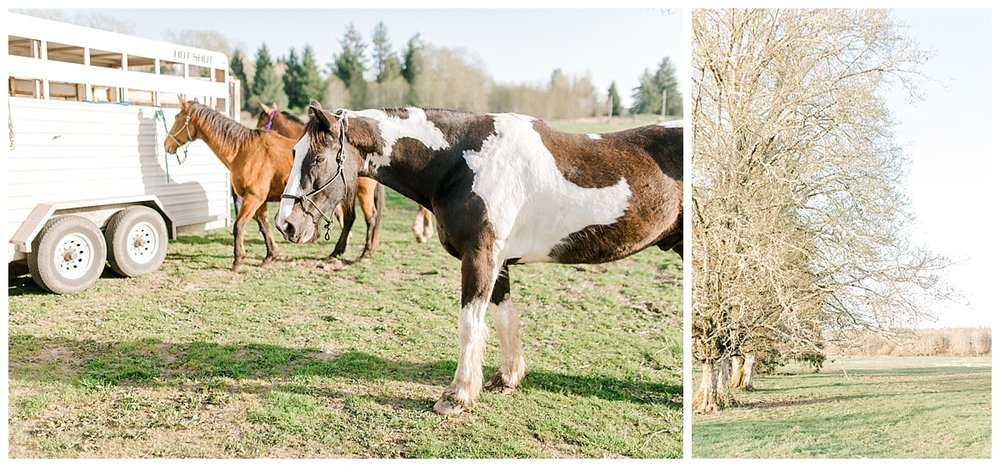 Sunset Senior Session with Horse | Senior Session Inspiration Session | Horse Photo Session | Pacific Northwest Light and Airy Wedding and Portrait Photographer | Emma Rose Company | Kindred Preset.jpg