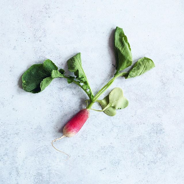 Radishes are just the cutest. 💘 That is all.