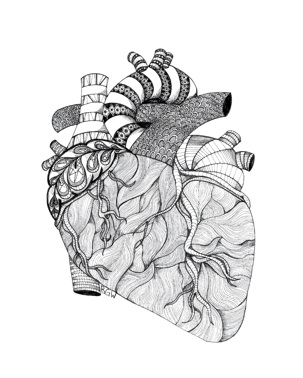 """anatomy: heart"""