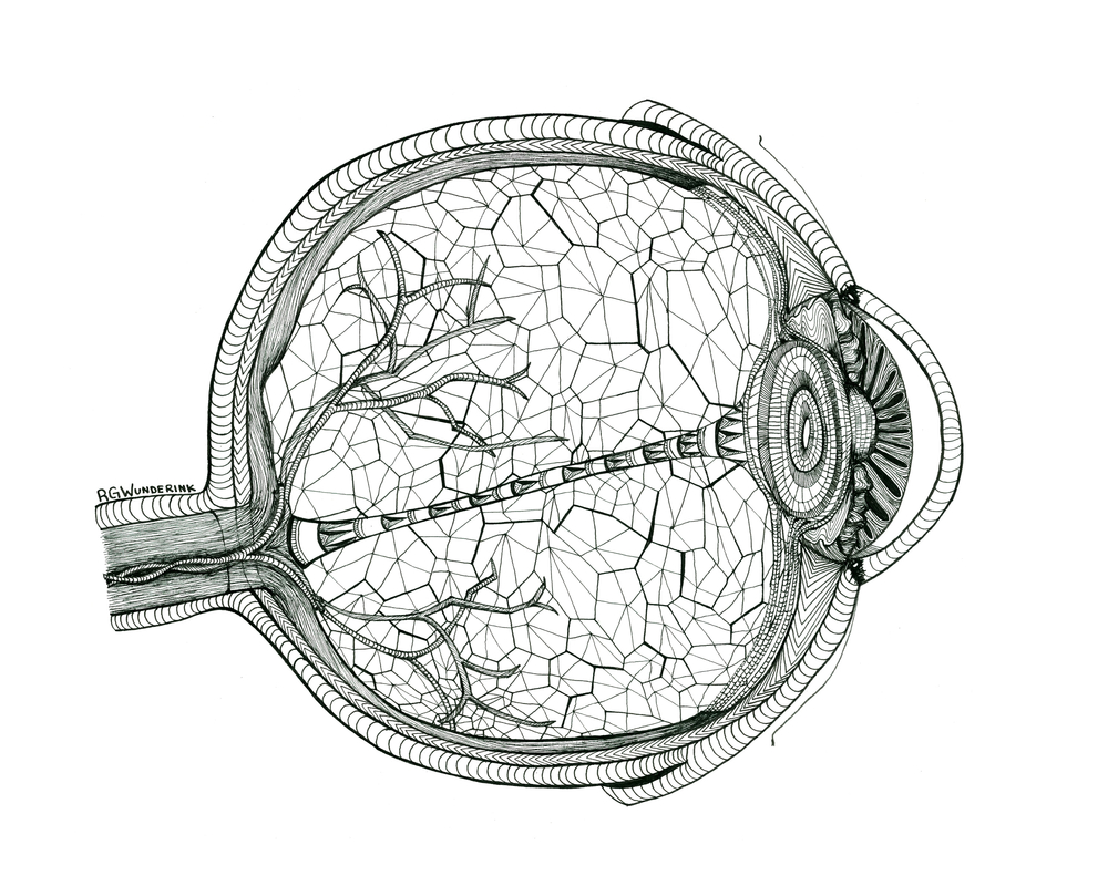 """anatomy: eye"""