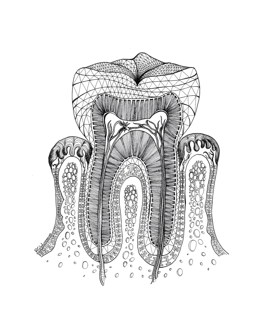 """anatomy: tooth"""
