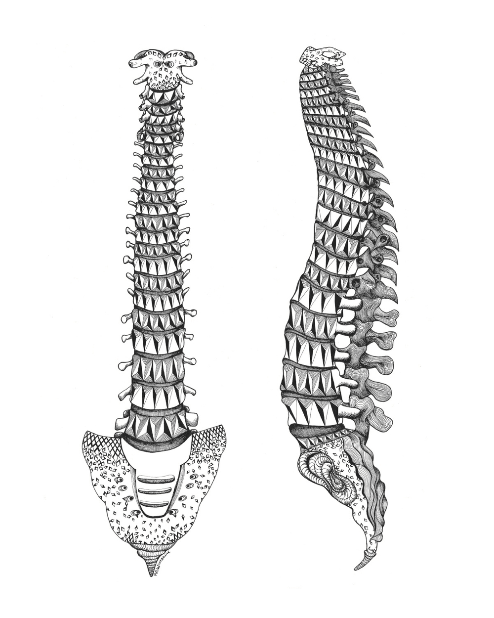 """anatomy: spines"""