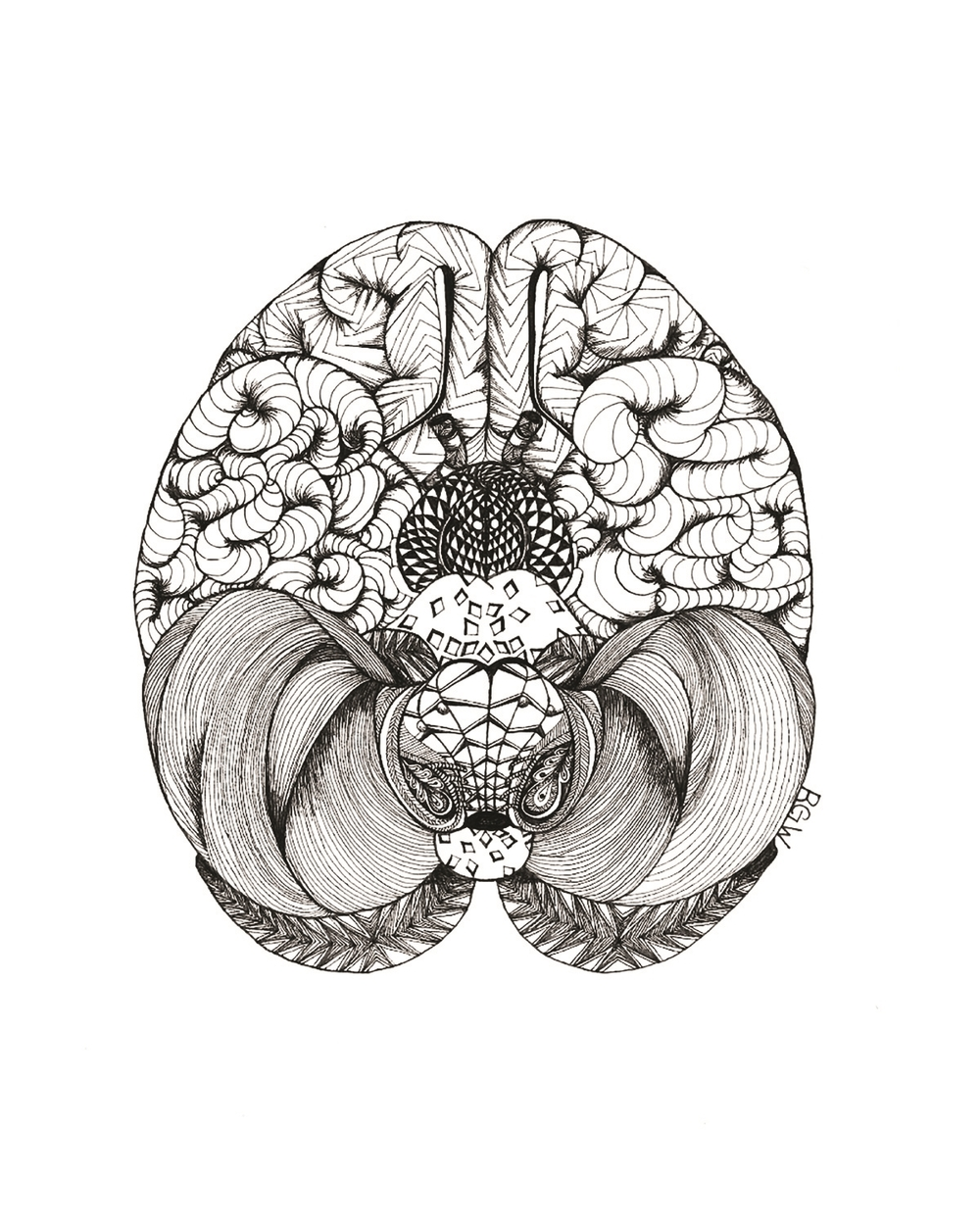 """anatomy: brain (bottom view)"