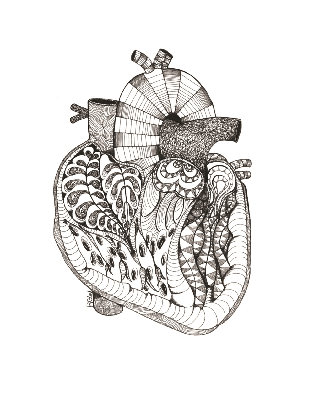 """anatomy: sliced heart"""