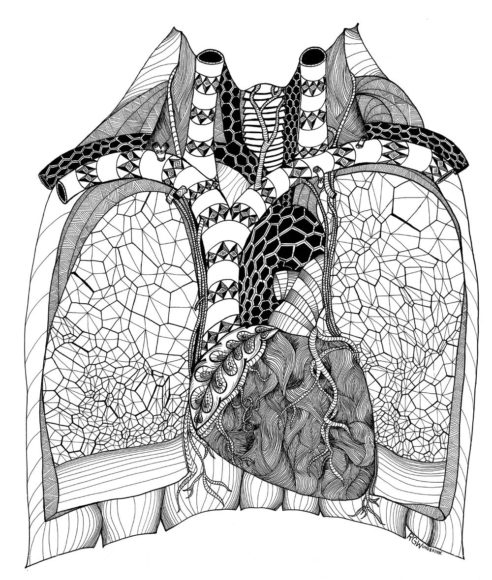 """anatomy: chest"""