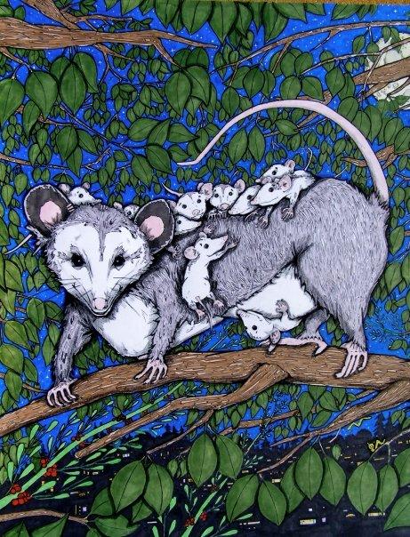 possum3.jpg