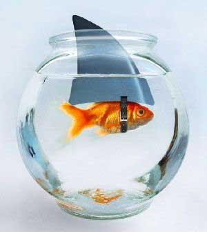 Funny-Shark-in-Fish-Tank.jpg