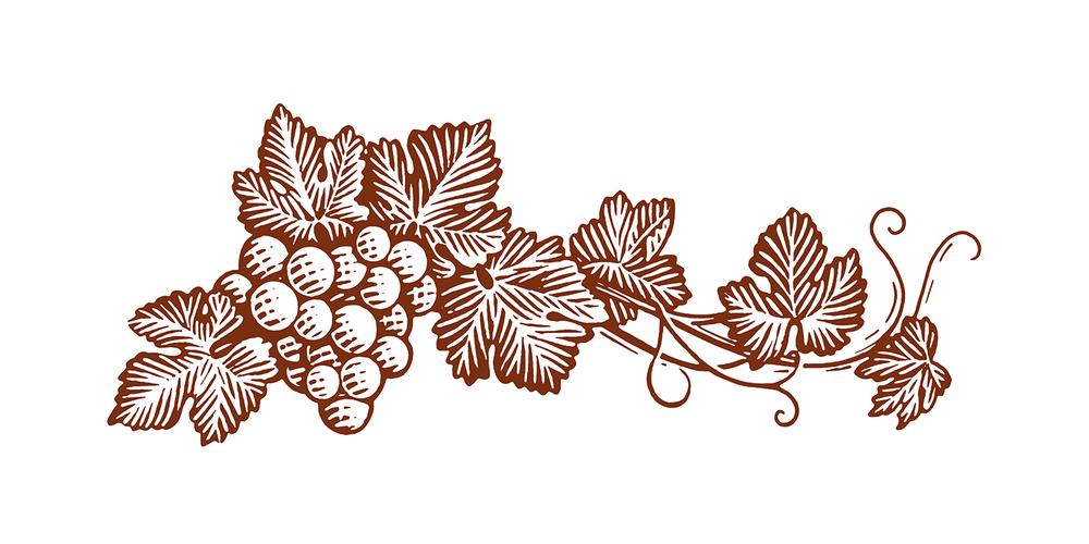 rx_redcap-vine.jpg