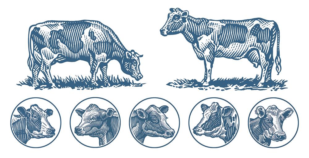 rx_dom-cows.jpg