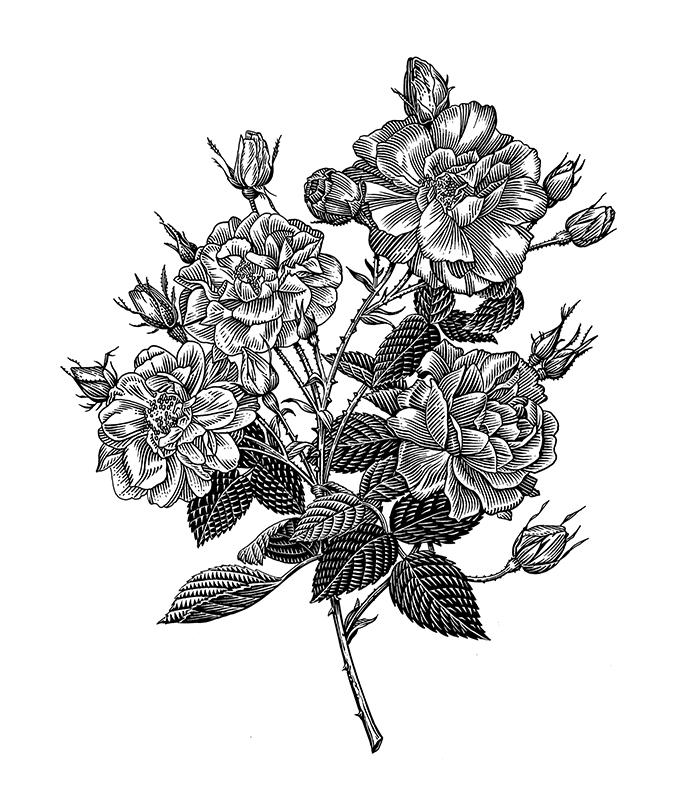 rx_flowers.jpg