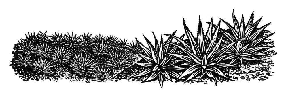 rx_agave-field.jpg