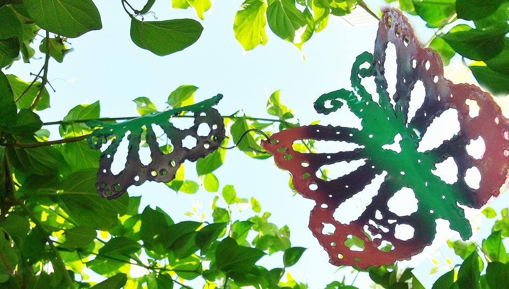 butterfly0000000000001.jpg