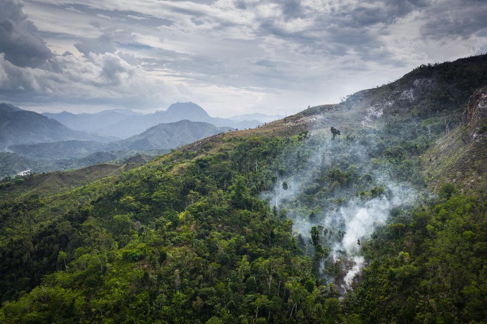 Madagascar Forest - Web-2.jpg