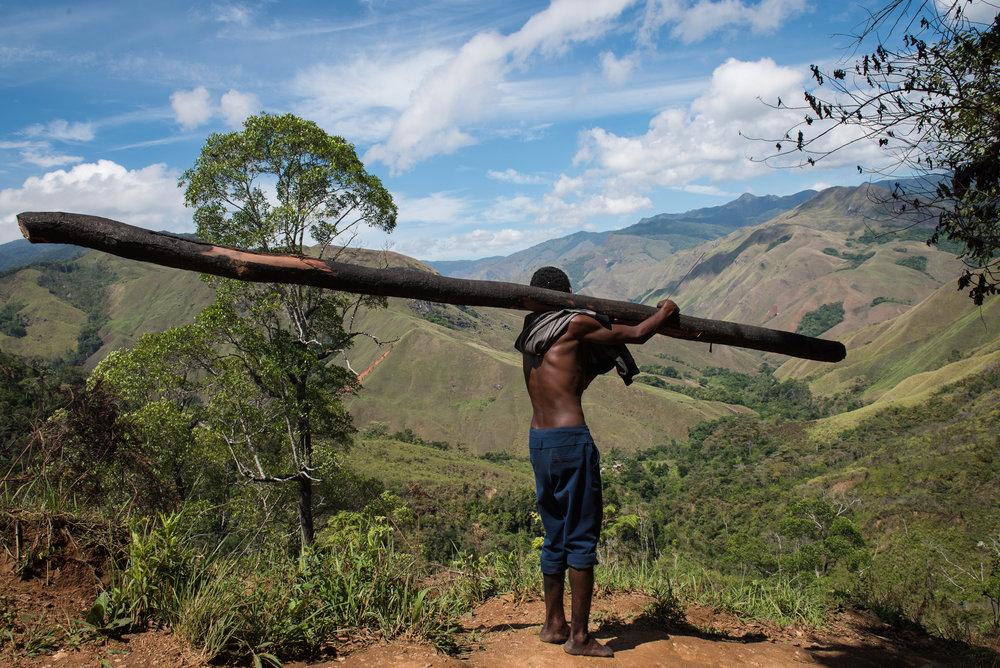 Madagascar Forest - Web-1.jpg