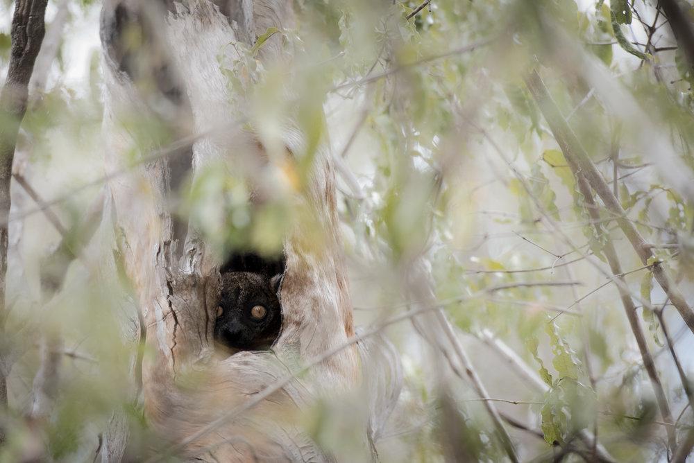 Madagascar Forest - Web-3.jpg
