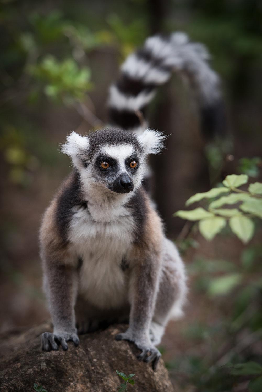 Madagascar Forest - Web-4.jpg