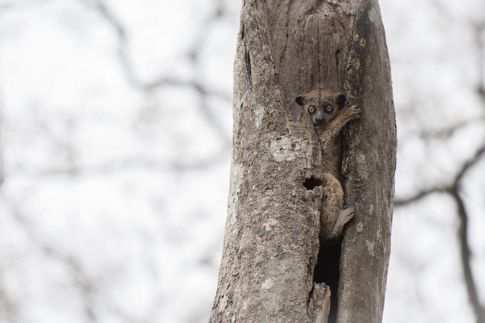 Madagascar Forest - Web-5.jpg
