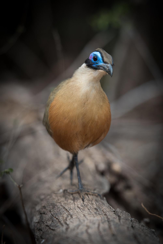 Madagascar Forest - Web-6.jpg