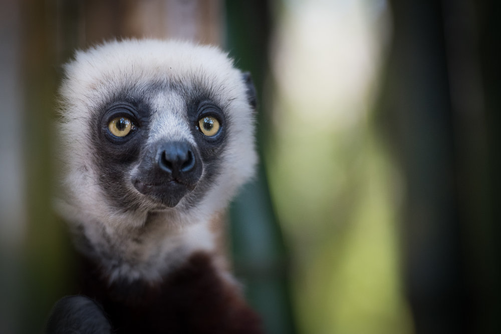 Madagascar Forest - Web-7.jpg