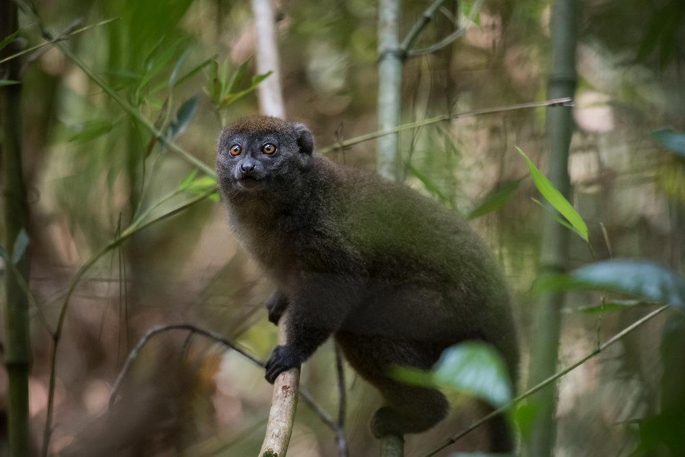 Madagascar Forest - Web-8.jpg