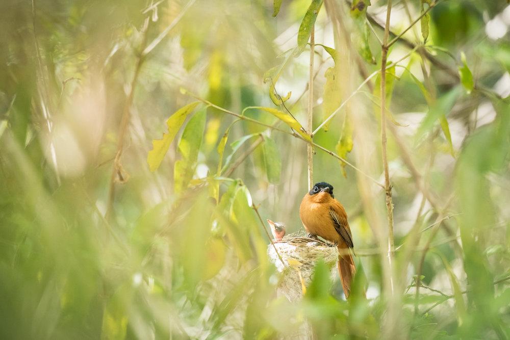 Madagascar Forest - Web-9.jpg