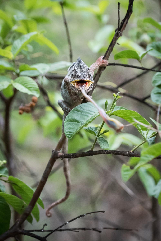 Madagascar Forest - Web-10.jpg