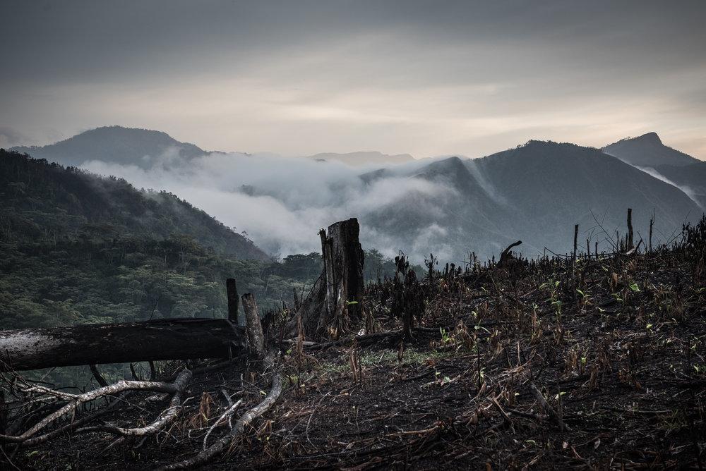 Madagascar Forest - Web-11.jpg