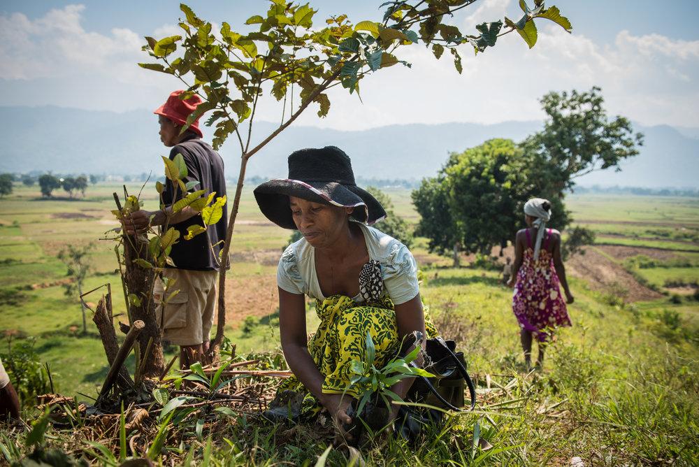 Madagascar Forest - Web-18.jpg