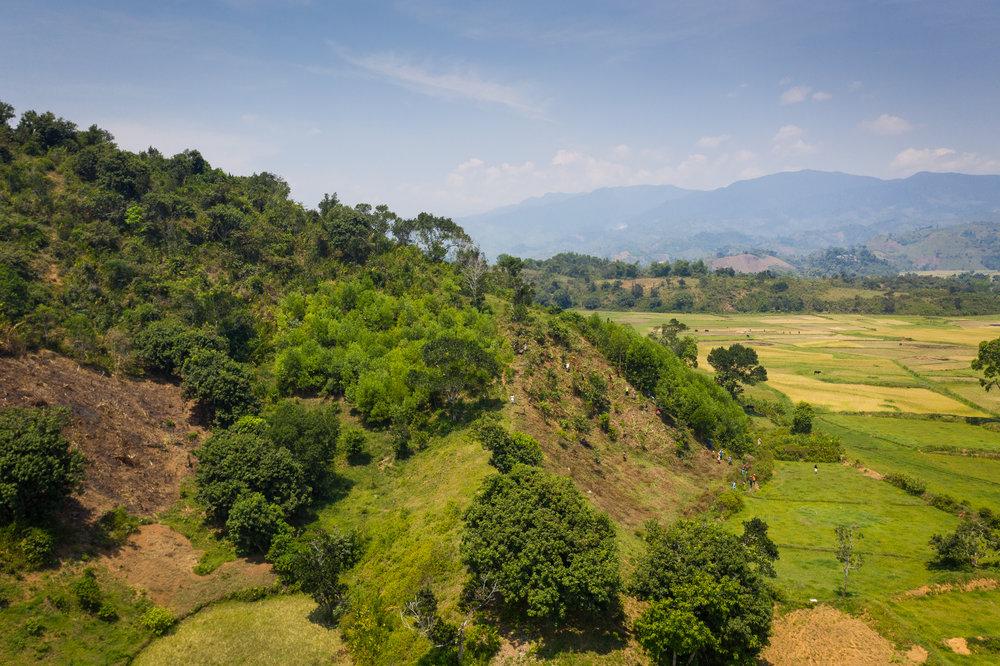 Madagascar Forest - Web-19.jpg
