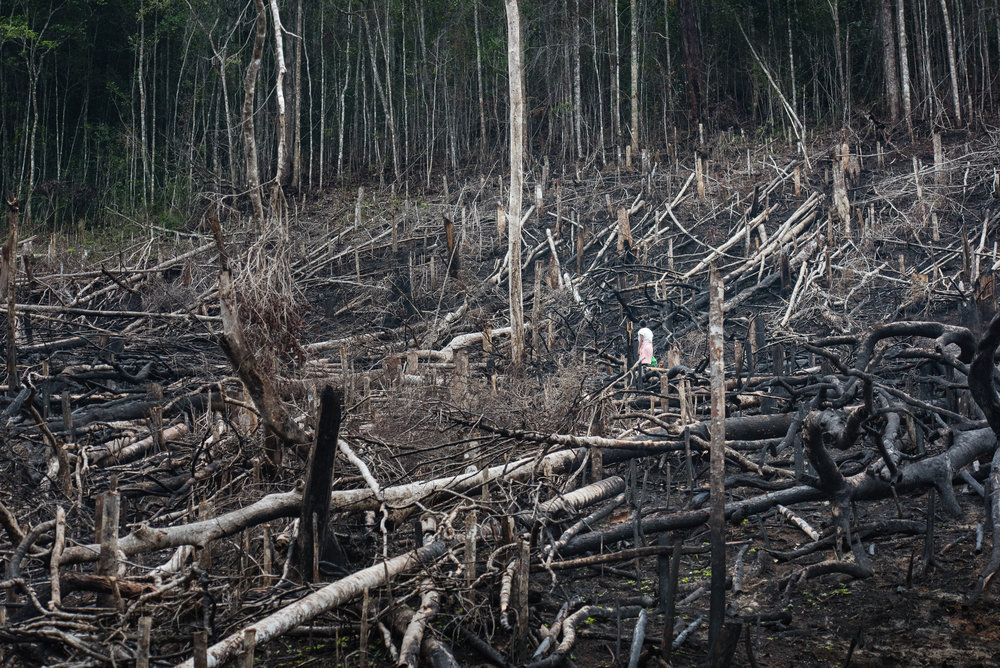 Madagascar Forest - Web-20.jpg