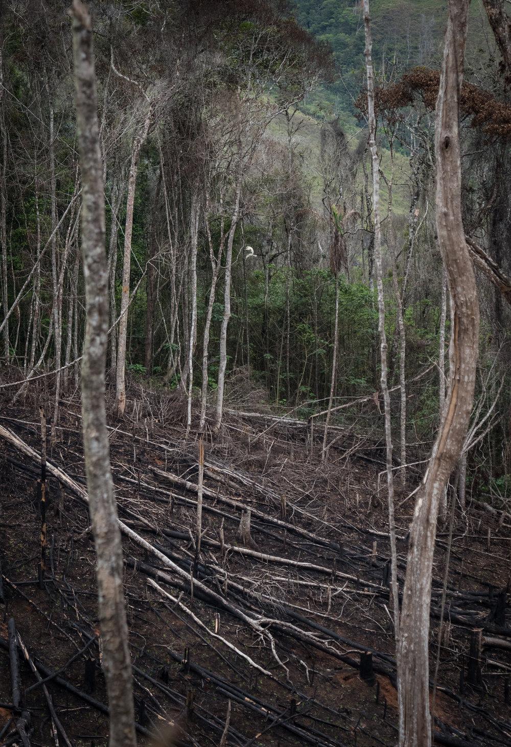 Madagascar Forest - Web-21.jpg