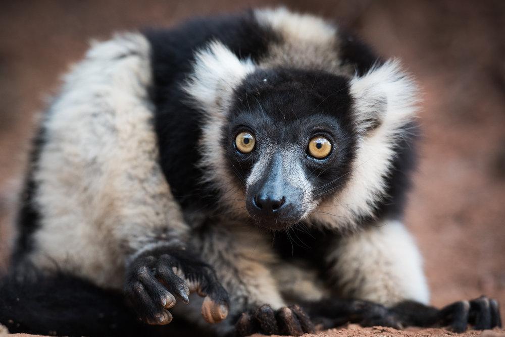 Madagascar Forest - Web-1-2.jpg