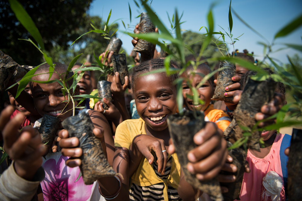 Madagascar Forest - Web-1-3.jpg