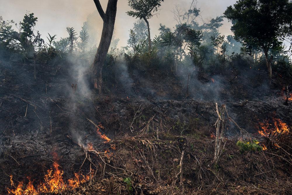 Madagascar Forest - Web-1-4.jpg