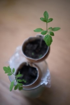 eggshell plant pots.jpg