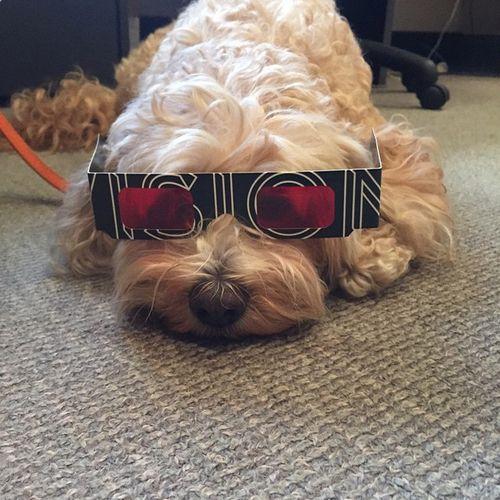 Hillsong-vision-dog