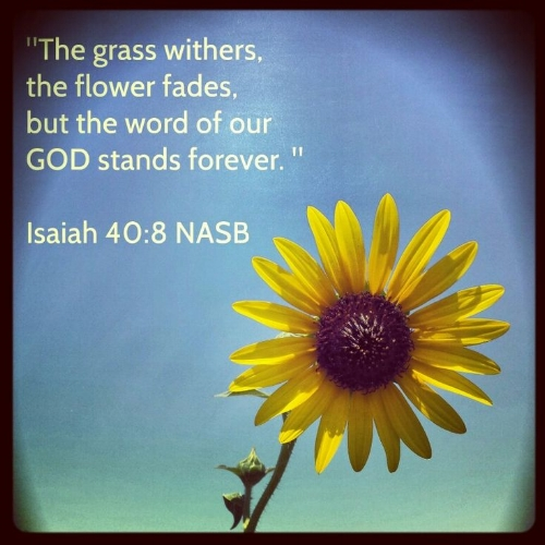 bible-quotes-about-flowers-quotesgram.jpeg