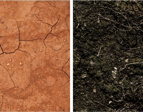 Left, red soil with heavy clay content is common in the Piedmont. While it's fertile, it has low organic content.  Right, a dark, humusy soil heavy in organic content. Slower-decomposing raw organic material (twigs and leaf petioles) is still recognizable.