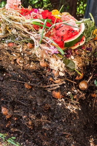 A compost pile shows the transformation of raw organic material into dark rich soil.