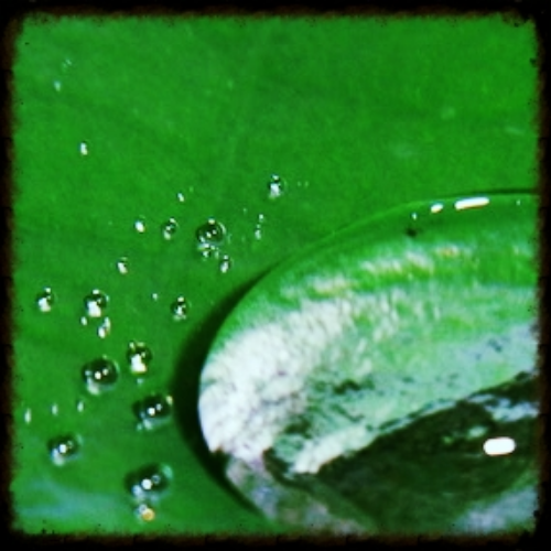 Water Drop in a Lily - Photograph by Pippa-la Doube. Ubud, Bali August 2011