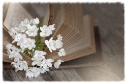 Book rewrite life coaching pippa-la doube inspiration.jpg