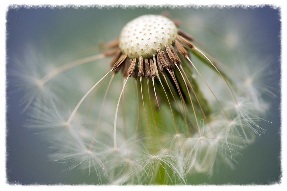 Make a wish manifestation human design pippa-la doube
